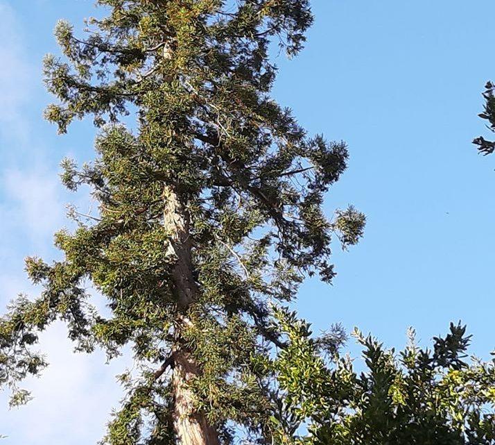 L'arbre urbain